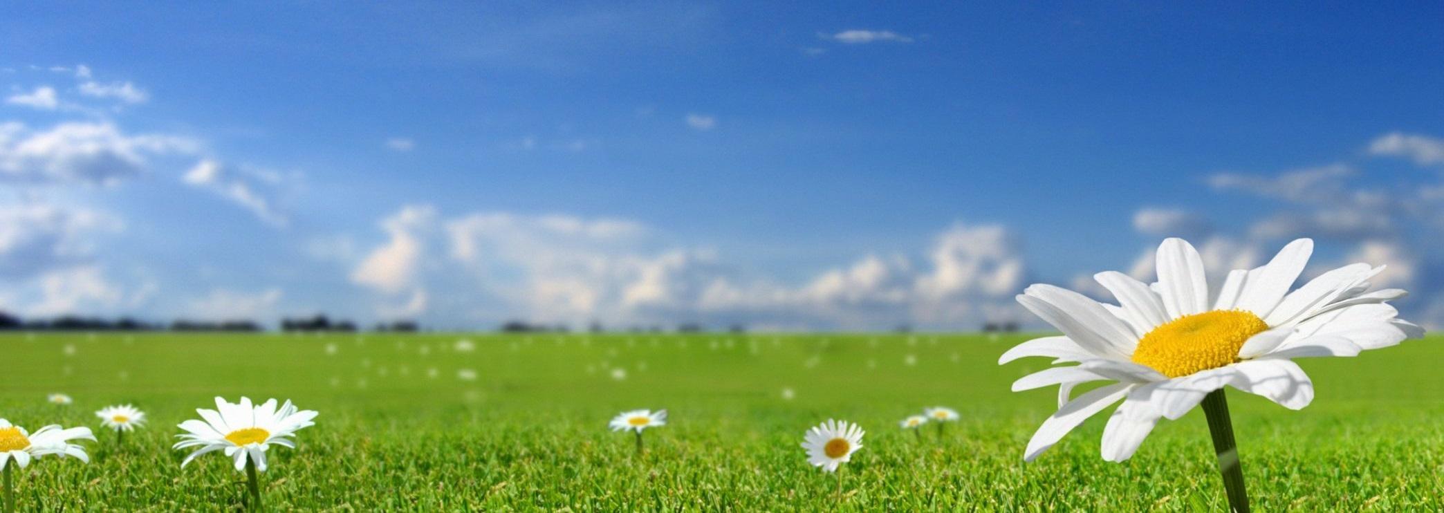flower-the-field-grass-nature-spring-summer-sun-sky